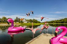 Happy Tammsvik blir med egen flamingofamilj -lanserar möteskonceptet Let's flamingle