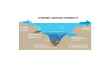 Fosforflöden i Stockholms innerskärgård
