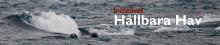 Kemikalier i vår havsmiljö, Östersjöseminarium med Initiativet Hållbara Hav