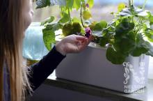 Nelson Garden ger odlarglädje till organtransplanterades familjer