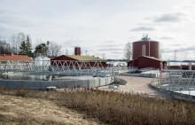 Ny teknik för att återvinna livsnödvändig fosfor