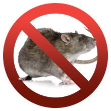 Råttinvasion - stoppa råttorna med JAFO RAT-EXX elektroniskt Råttstopp