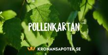 Björkpollen på antågande – så lindrar du pollenplågan.