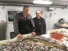 Hører torsken egentlig hjemme på Svalbard?