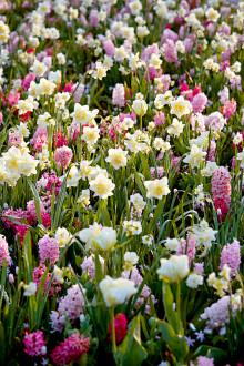 Nyhet: Få en Keukenhofrabatt i din egen trädgård