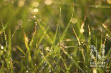 Bästa tiden att så gräs