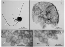 Giftige alger kan avsløres med miljøovervåkningssystemer