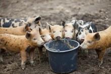 Kvarlämnade matrester kan sprida dödlig djursjukdom