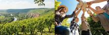 Frestelser från öl- och vinregionen Franken