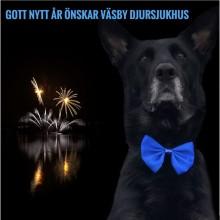 Årets djurklinik 2018, Väsby djursjukhus informerar. Fyrverkerierna skrämmer husdjuren. Såhär kan du hjälpa.