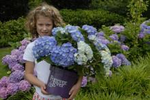 Trädgårdshortensian Forever&Ever utvald till en av de 10 bästa trädgårdsprodukterna på Elmia Garden Awards 2016