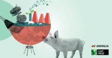Forbrukere vil ha mer kunnskap om kjøtt