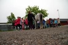 Upplev häst på schemat för 2 000 barn