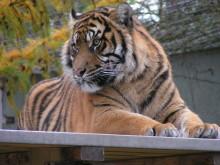 Höstlovsöppet Parken Zoo