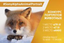 Объявлено жюри конкурса #SonyAlphaAnimalPortrait