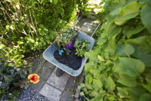 83% nöjda med trädgårdsavfallshämtning – nu finns tjänsten för alla stockholmare