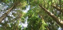 Hundra miljoner kronor till forskning om framtidens skogsprodukter
