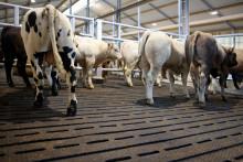 Fjøssystemer lanserer nye gummimatter for spaltegulv i Norge