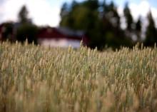 Effekten av torkan slår kraftigt även på 2019