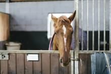 Riksdagsbeslut om slopad förprövning förödande för djurskyddet