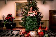 Ensam julgran söker...