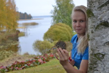 Painija Petra Ollin valinta on Maxim-urheiluravinteet