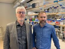 Umeå i internationell forskning mot dödliga virus