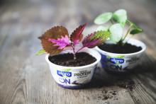 Vi har bytt till blåbär, vilka växter byter du?