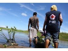 Mangroveplantering i Indonesien efter tsunamikatastrofen