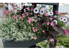 Recept på en lyckad plantering maj-juni