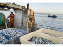 Löjfiske 7/Vendace roe fishing 7