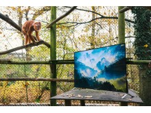 Sony 4K in Zoo_Langurs