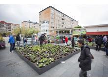 Nya planteringar på Hjällbo Centrum - av och för Hjällbo-borna