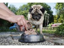 Hund beim Fressen 2