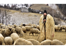 Shepherd from Transylvania
