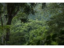 Regnskov i Pico Bonito