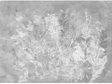 Martin-Bergstrom-Flora-Hysterica-1-Pattern