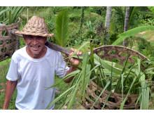 Lokal farmer på Bali, Indonesien
