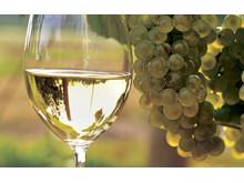 Vin från Tarnaveni