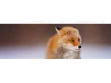 Tier-Augen-AF_von_Sony_05