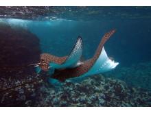 Galápagosöarna