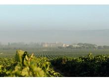 Vineyard Abadía Retuerta