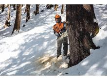 MS 462 - store træer ingen hindring