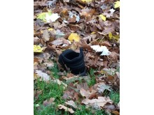 Alex's lost shoe in the park