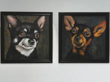 Hund & katt på liv & död