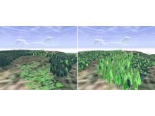 Prognoseverktøyet kan også visualisere hvordan endringene i skogen blir.