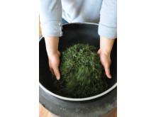 Koreanske temästaren rostar grönt te