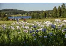 St Olavsleden - Pilgrimage between Sweden and Norway
