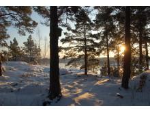 Vinter i Stockholms skärgård