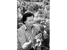Francois Lurton i vingården